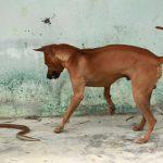 Danh Sách 9 Loài Chó Giữ Nhà Tốt Nhất