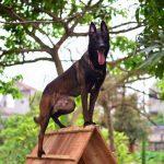Danh Sách 04 Đặc Điểm Ưu Tú Nhất Ở Loài Chó