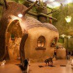 Danh Sách 9 Địa Chỉ Quán cà phê thú cưng đẹp nhất Tokyo, Nhật Bản