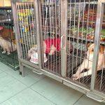 Danh Sách 9 Dịch vụ trông giữ chó mèo ngày Tết ở Hà Nội uy tín nhất